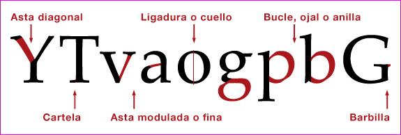 Anatomía del tipo de letra (I)